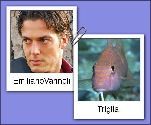 Somiglianza tra Emiliano Vannoli e una triglia