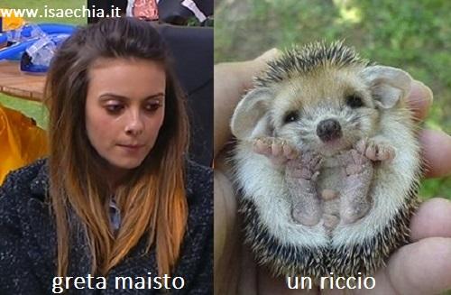 Somiglianza tra Greta Maisto e un riccio