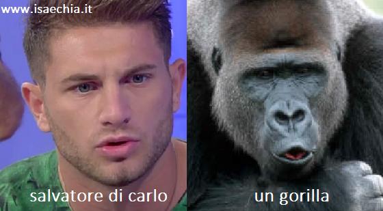 Somiglianza tra Salvatore Di Carlo e un gorilla