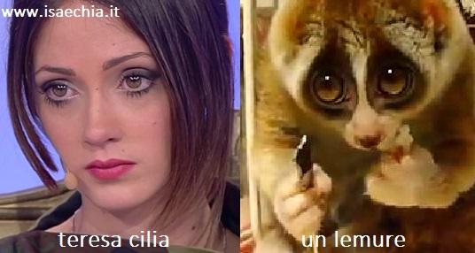 Somiglianza tra Teresa Cilia e un lemure